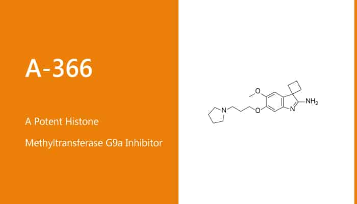 A 366 is a Potent Histone Methyltransferase G9a Inhibitor 2020 01 23 - A-366 is a Potent Histone Methyltransferase G9a Inhibitor
