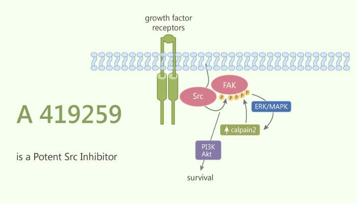 A 419259 is a Potent Src Inhibitor 2020 10 08 - A 419259 is a Potent Src Inhibitor