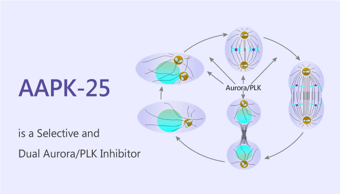 AAPK 25 is a Selective and Dual Aurora PLK 2019 08 26 Inhibitor - AAPK-25 is a Selective and Dual Aurora/PLK Inhibitor
