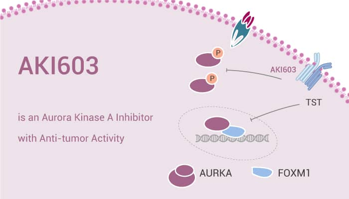 AKI603 is an Aurora Kinase A Inhibitor with Anti tumor Activity 2021 02 17 - AKI603 is an Aurora Kinase A Inhibitor with Anti-tumor Activity