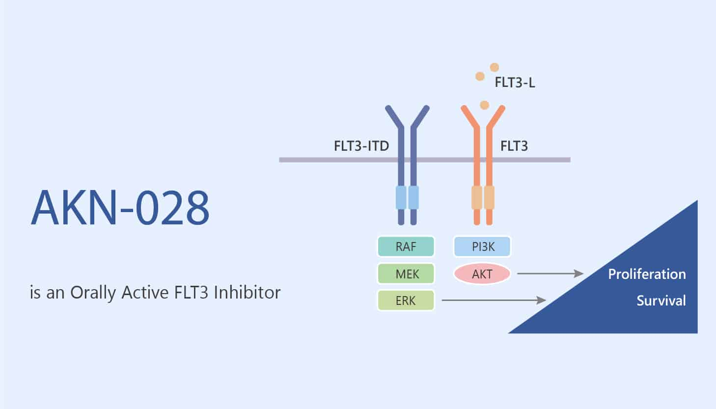 AKN 028 is an Orally Active FLT3 Inhibitor 2020 05 28 - AKN-028 is an Orally Active FLT3 Inhibitor