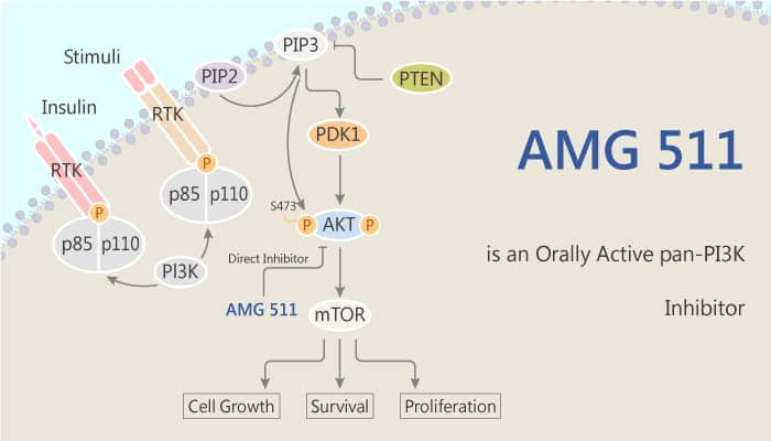 AMG 511 is an Orally Active pan PI3K Inhibitor 2020 04 30 - AMG 511 is an Orally Active pan-PI3K Inhibitor