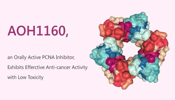 AOH1160 an Orally Active PCNA Inhibitor Exhibits efferctive Anti cancer Activity with Low Toxicity 2019 09 15 - AOH1160, an Orally Active PCNA Inhibitor, Exhibits Efferctive Anti-cancer Activity with Low Toxicity