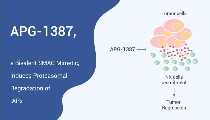 APG 1387 a Bivalent SMAC Mimetic Induces Proteasomal Degradation of IAPs 2020 01 07 - APG-1387, a Bivalent SMAC Mimetic, Induces Proteasomal Degradation of IAPs