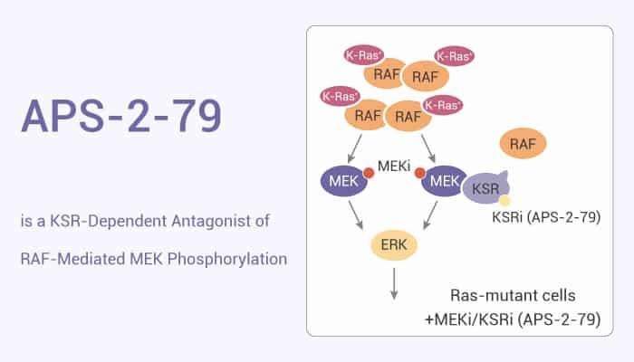 APS 2 79 is a KSR Dependent Antagonist of RAF Mediated MEK Phosphorylation 2021 04 15 - APS-2-79 is a KSR-Dependent Antagonist of RAF-Mediated MEK Phosphorylation