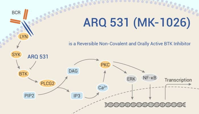 ARQ 531 MK 1026 is a Reversible Non Covalent and Orally Active BTK Inhibitor 2021 09 18 - ARQ 531 (MK-1026) is a Reversible Non-Covalent and Orally Active BTK Inhibitor