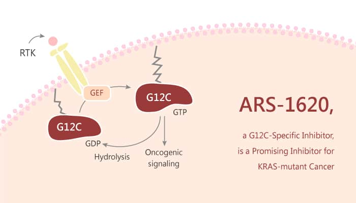 ARS 1620 a G12C Specific Inhibitor is a Promising Candidate for KRAS mutant Cancer 2019 07 20 - ARS-1620, a G12C-Specific Inhibitor, is a Promising Candidate for KRAS-mutant Cancer