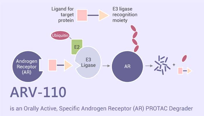 ARV 110 is an Orally Active Specific Androgen Receptor AR PROTAC Degrader 2021 06 19 - ARV-110 is an Orally Active, Specific Androgen Receptor (AR) PROTAC Degrader