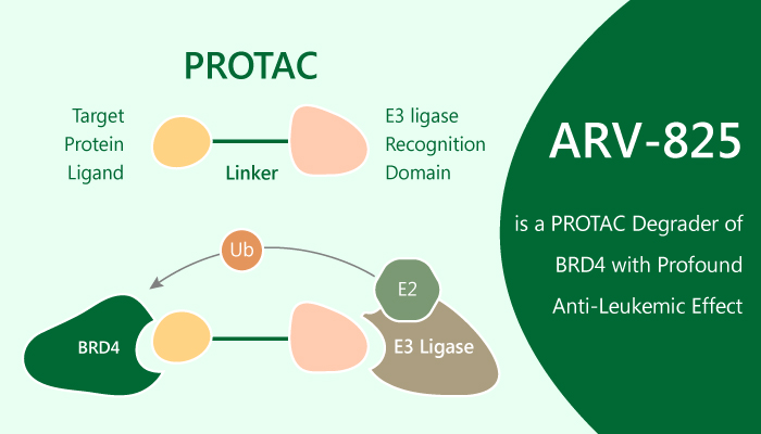 ARV 825 is a PROTAC Degrader of BRD4 with Profound Anti Leukemic Effect 2019 08 29 - ARV-825 is a PROTAC Degrader of BRD4 with Profound Anti-Leukemic Effect