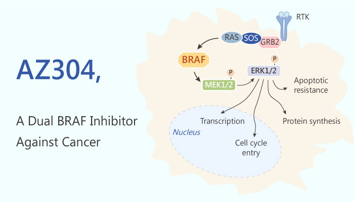 AZ304 Dual BRAF Inhibitor lung cancer ovary cancer colorectal cancer 2019 04 12 - AZ304, a Dual BRAF Inhibitor Against Cancer