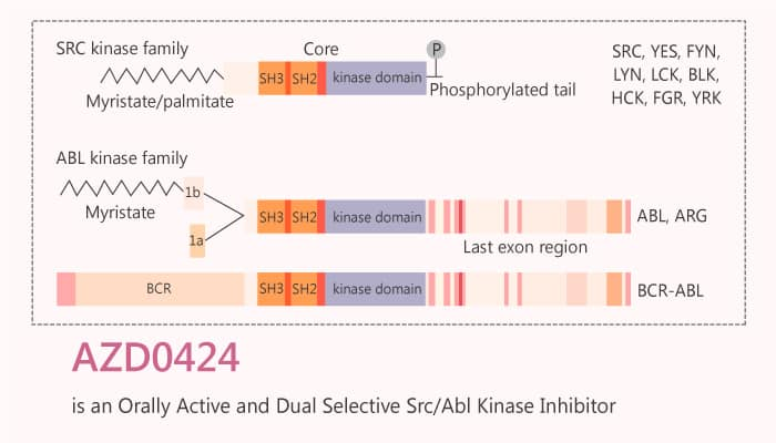 AZD0424 is an Orally Active and Dual Selective Src Abl Kinase Inhibitor 2019 09 25 - AZD0424 is an Orally Active and Dual Selective Src/Abl Kinase Inhibitor