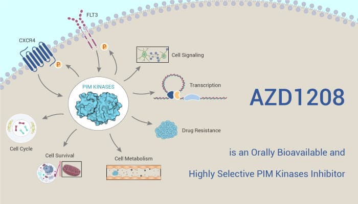 AZD1208 is an Orally Bioavailable and Highly Selective PIM Kinases Inhibitor 2021 04 28 - AZD1208 is an Orally Bioavailable and Highly Selective PIM Kinases Inhibitor