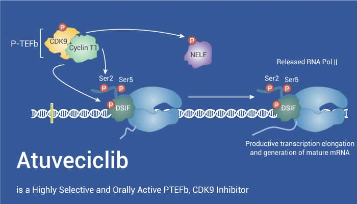 Atuveciclib is a Highly Selective and Orally Active PTEFb CDK9 Inhibitor 2021 10 16 - Atuveciclib is a Highly Selective and Orally Active PTEFb, CDK9 Inhibitor