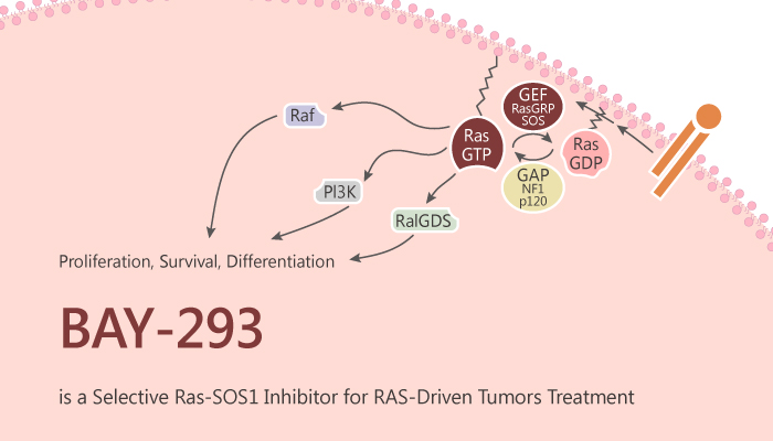 BAY 293 is a Selective KRas SOS1 Inhibitorf or RAS Driven Tumors Treatment 2019 08 31 - BAY-293 is a Selective KRas-SOS1 Inhibitor for RAS-Driven Tumors Treatment