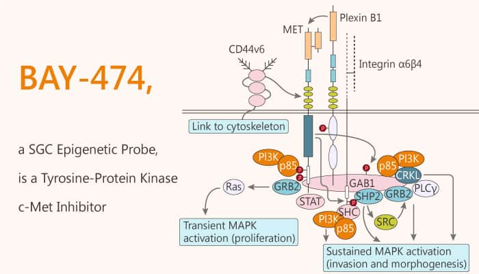BAY 474 a SGC Epigenetic Probe is a Tyrosine Protein Kinase c Met Inhibitor 2020 02 02 - BAY-474, a SGC Epigenetic Probe, is a Tyrosine-Protein Kinase c-Met Inhibitor