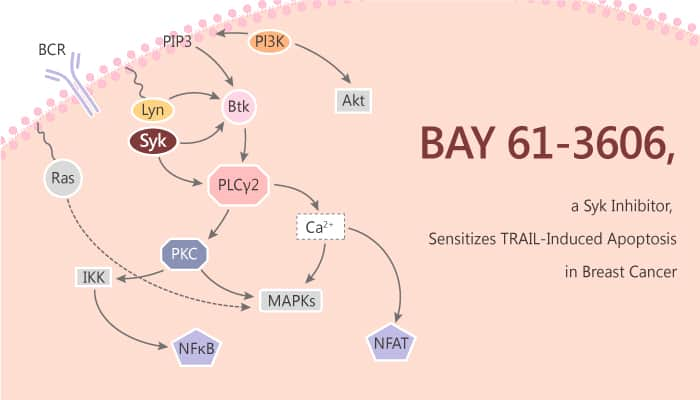 BAY 61 3606 a Syk Inhibitor Sensitizes TRAIL Induced Apoptosis by Downregulating Mcl 1 in Breast Cancer 2019 09 12 - BAY 61-3606, a Syk Inhibitor, Sensitizes TRAIL-Induced Apoptosis by Downregulating Mcl-1 in Breast Cancer