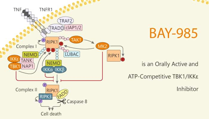 BAY 985 is an Orally Active and ATP Competitive TBK1 IKKε Inhibitor 2020 02 22 - BAY-985 is an Orally Active and ATP-Competitive TBK1/IKKε  Inhibitor