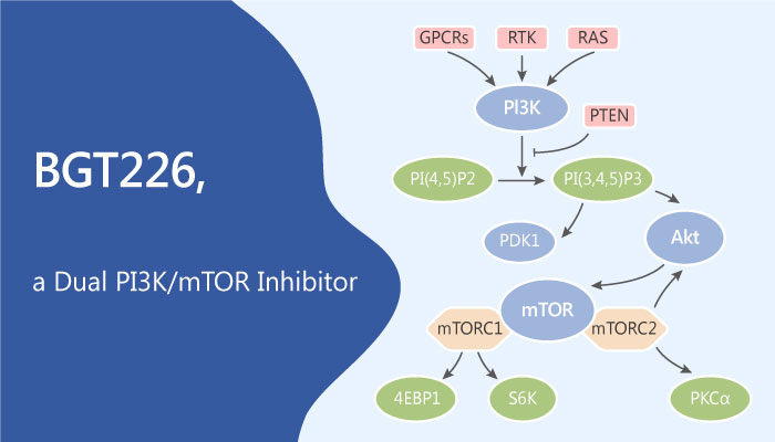 BGT226 is a Dual PI3K mTOR Inhibitor 2019 05 25 - BGT226 is a Dual PI3K/mTOR Inhibitor