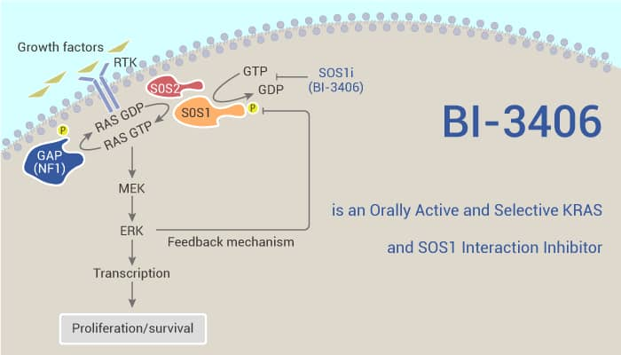 BI 3406 is an Orally Active and Selective KRAS and SOS1 Interaction Inhibitor 2021 05 18 - BI-3406 is an Orally Active and Selective KRAS and SOS1 Interaction Inhibitor