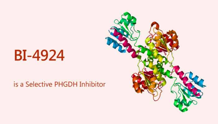 BI 4924 is a Selective PHGDH Inhibitor 2019 08 23 - BI-4924 is a Selective PHGDH Inhibitor