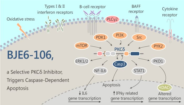 BJE6 106 a Selective PKCδ Inhibitor Triggers Caspase Dependent Apoptosis 2019 08 20 - BJE6-106, a Selective PKCδ Inhibitor, Triggers Caspase-Dependent Apoptosis