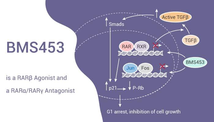 BMS453 is a RARβ Agonist and a RARα RARγ Antagonist 2020 01 30 - BMS453 is a RARβ Agonist and a RARα/RARγ Antagonist