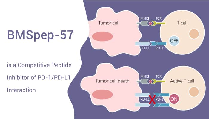 BMSpep 57 is a Competitive Peptide Inhibitor of PD 1 PD L1 Interaction 2021 05 04 - BMSpep-57 is a Competitive Peptide Inhibitor of PD-1/PD-L1 Interaction