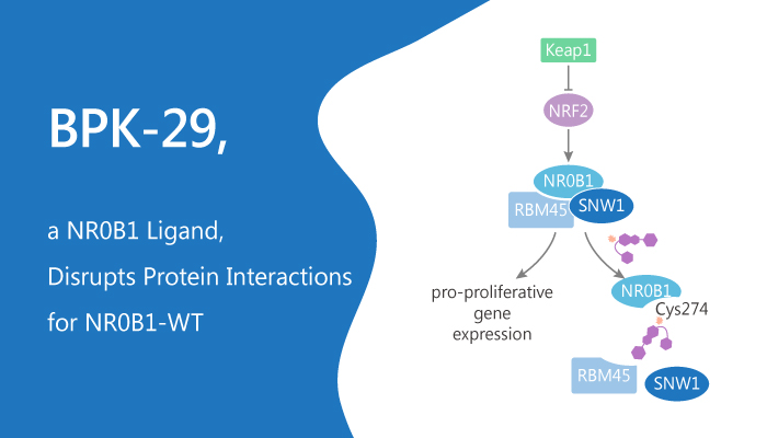 BPK 29 a NR0B1 Ligand Disrupts Protein Interactions for NR0B1 WT 2019 09 29 - BPK-29, a NR0B1 Ligand, Disrupts Protein Interactions for NR0B1-WT