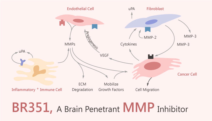 BR351 Brain Penetrant Matrix metalloproteinase MMP Inhibitor 2019 04 05 - BR351 is a Brain Penetrant MMP Inhibitor