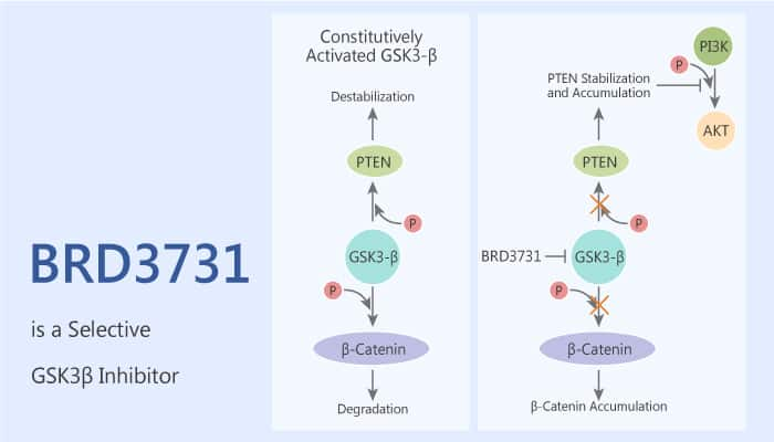 BRD3731 is a Selective GSK3β Inhibitor 2020 10 21 - BRD3731 is a Selective GSK3β Inhibitor
