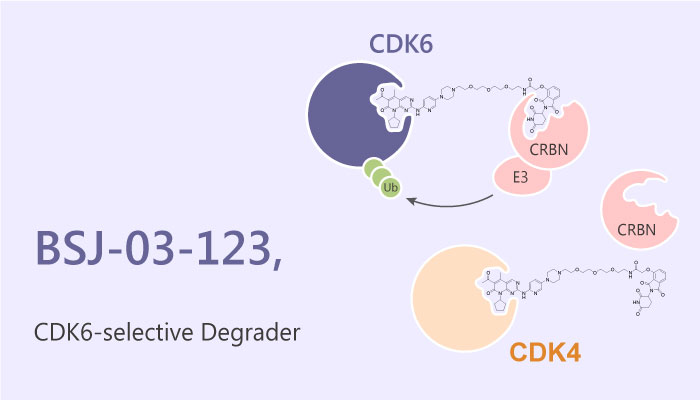 BSJ 03 123 Degrader with Proteome wide Selectivity for CDK6 PROTAC 2019 05 04 - BSJ-03-123, a Degrader with Proteome-wide Selectivity for CDK6 (PROTAC)