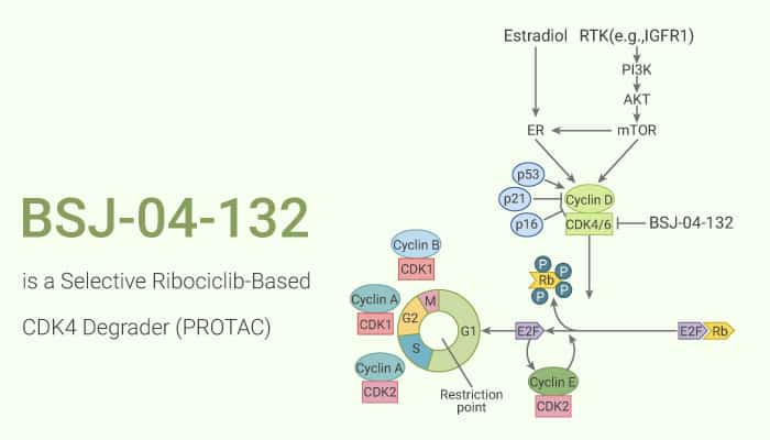 BSJ 04 132 is a Selective Ribociclib Based CDK4 Degrader PROTAC 2020 10 24 - BSJ-04-132 is a Selective Ribociclib-Based CDK4 Degrader (PROTAC)