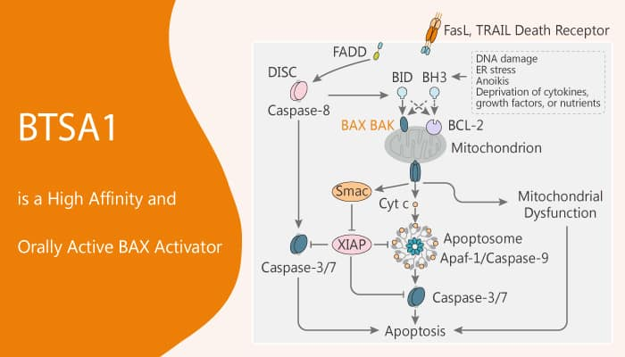 BTSA1 is a High Affinity and Orally Active BAX Activator 2020 03 11 - BTSA1 is a High Affinity and Orally Active BAX Activator