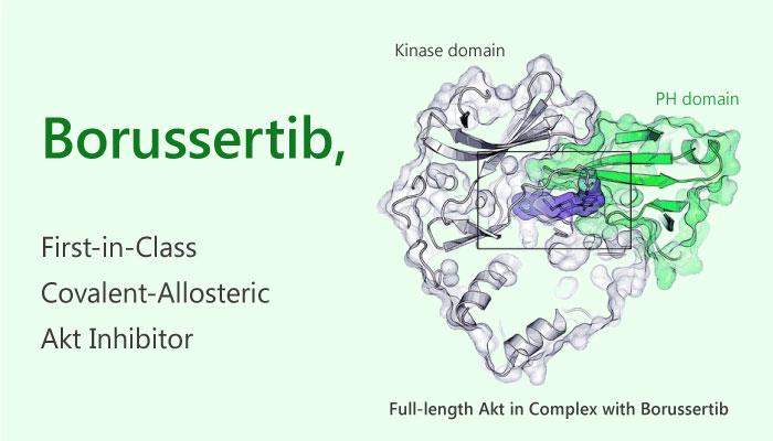 Borusserti Akt inhibitor cancer 2019 04 26 - Borussertib, a Covalent-Allosteric Akt Inhibitor
