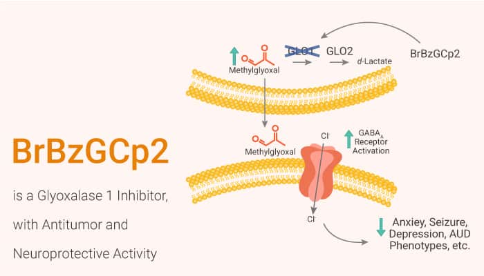 BrBzGCp2 is a Glyoxalase 1 Inhibitor with Antitumor and Neuroprotective Activity 2021 03 10 - BrBzGCp2 is a Glyoxalase 1 Inhibitor, with Antitumor and Neuroprotective Activity