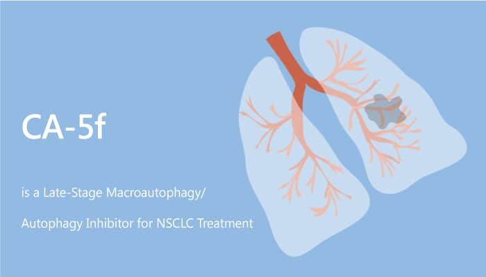 CA 5f is a Late Stage Macroautophagy Autophagy inhibitor for NSCLC Treatment 2019 08 06 - CA-5f is a Late-Stage Macroautophagy (Autophagy) Inhibitor for NSCLC Treatment