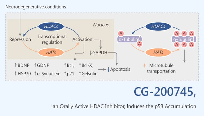 CG 200745 a HDAC Inhibitor Induces the Accumulation of p53 2019 10 14 - CG-200745, a HDAC Inhibitor, Induces the Accumulation of p53