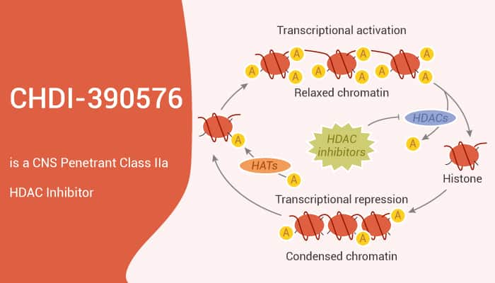 CHDI 390576 is a CNS Penetrant Class IIa HDAC Inhibitor 2020 12 16 - CHDI-390576 is a CNS Penetrant Class IIa HDAC Inhibitor