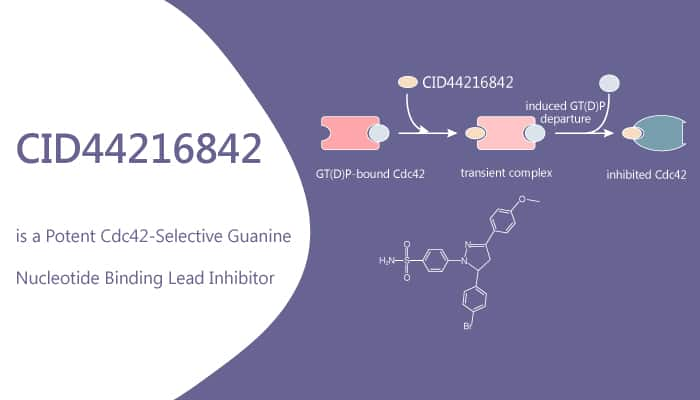 CID44216842 is a Potent Cdc42 Selective Guanine Nucleotide Binding Lead Inhibitor 2020 06 12 - CID44216842 is a Potent Cdc42-Selective Guanine Nucleotide Binding Lead Inhibitor