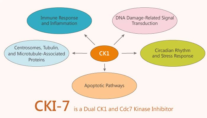 CKI 7 is a Dual CK1 and Cdc7 Kinase Inhibitor 2020 01 10 - CKI-7 is a Dual CK1 and Cdc7 Kinase Inhibitor