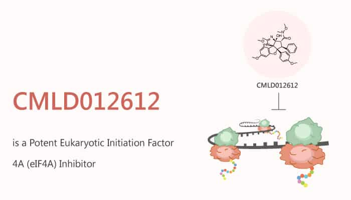 CMLD012612 is a Potent Eukaryotic Initiation Factor 4A eIF4A Inhibitor 2020 10 10 - CMLD012612 is a Potent Eukaryotic Initiation Factor 4A (eIF4A) Inhibitor