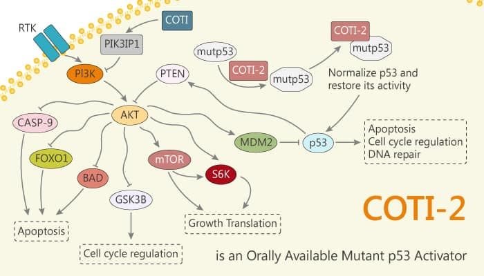 COTI 2 is an Orally Available Mutant p53 Activator 2020 01 16 - COTI-2 is an Orally Available Mutant p53 Activator