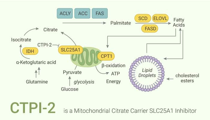 CTPI 2 is a Mitochondrial Citrate Carrier SLC25A1 Inhibitor 2020 12 22 - CTPI-2 is a Mitochondrial Citrate Carrier SLC25A1 Inhibitor