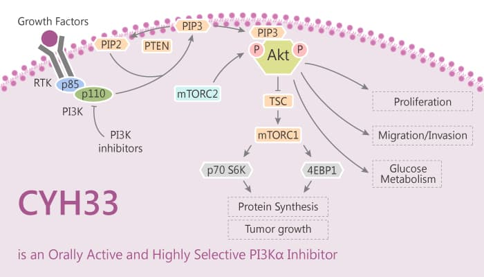 CYH33 is an Orally Active and Highly Selective PI3Kα Inhibitor 2020 08 11 - CYH33 is an Orally Active and Highly Selective PI3Kα Inhibitor