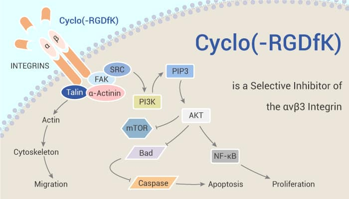 Cyclo RGDfK is a Selective Inhibitor of the αvβ3 Integrin 2020 11 07 - Cyclo(-RGDfK) is a Selective Inhibitor of the αvβ3 Integrin