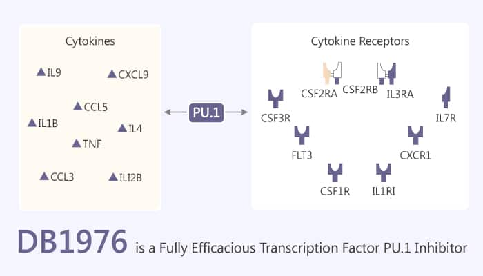 DB1976 is a Fully Efficacious Transcription Factor PU.1 Inhibitor 2020 03 28 - DB1976 is a Fully Efficacious Transcription Factor PU.1 Inhibitor