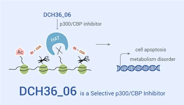 DCH36 06 is a Selective p300 CBP Inhibitor 2021 07 31 - DCH36_06 is a Selective p300/CBP Inhibitor