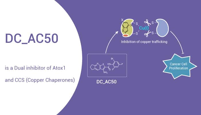 DC AC50 is a Dual inhibitor of Atox1 and CCS Copper haperones 2021 04 03 - DC_AC50 is a Dual inhibitor of Atox1 and CCS (Copper Chaperones)