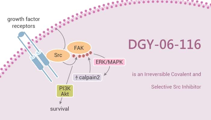 DGY 06 116 is an Irreversible Covalent and Selective Src Inhibitor 2021 06 17 - DGY-06-116 is an Irreversible Covalent and Selective Src Inhibitor