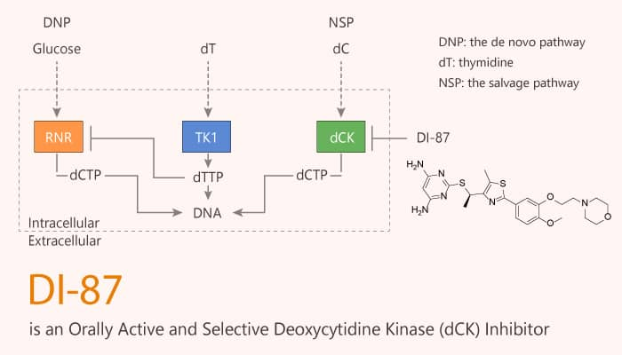 DI 87 is an Orally Active and Selective Deoxycytidine Kinase dCK Inhibitor 2020 07 01 - DI-87 is an Orally Active and Selective Deoxycytidine Kinase (dCK) Inhibitor